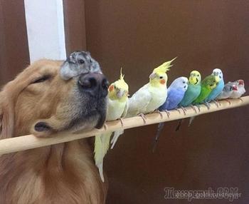 Собака, хомячок и 8 попугаев - необычные лучшие друзья, покорившие сердца миллионов людей