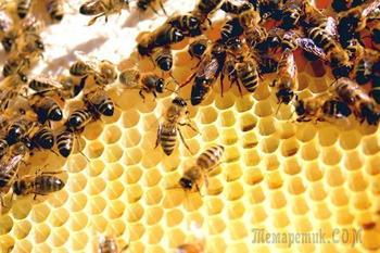 10 последствий вымирания пчел