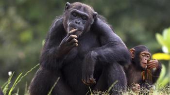 Как животные могут изменить историю человечества: 10 примеров