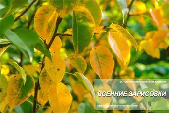 Фотопрогулка. Осенние картинки
