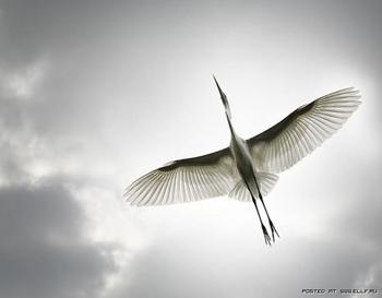 Я птица (Стих)