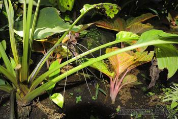 Бали 2016 или что подарить себе на юбилей. 9-е августа. Сад орхидей и Кута