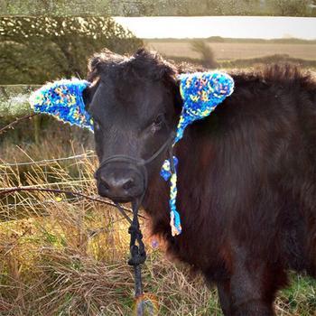 Фермеры защищают коров от обморожения с помощью вот таких очаровательных наушников