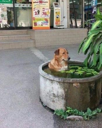 28 собак, действия которых невозможно объяснить