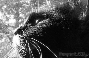 Кот и первый снег (Стих)
