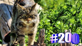 Ваши любимые котики. Выпуск #200. Приятного просмотра