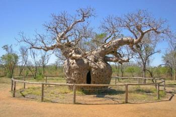 10 самых удивительных деревьев планеты