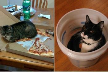 Коты, которым плевать на всё