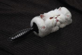 33 примера самой креативной и забавной рекламы с котиками