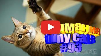 Смешные коты | Приколы с котами | Видео про котов | Котомания #93