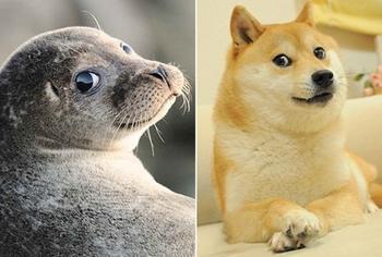 Морские котики - почти как собаки. Только они котики