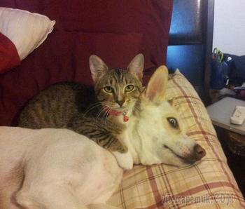 25 смешных фотографий совместной жизни собак и кошек
