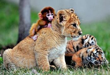 Необычные друзья и просто животные в фотографиях
