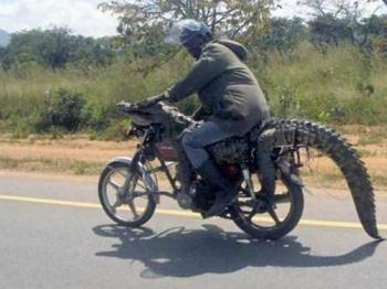 Удивительная, а порой и немного забавная Африка на колоритных фото