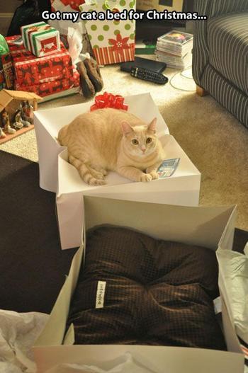 Владельцы кошек поймут