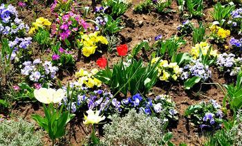 Весенний оазис в Софии