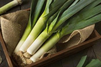 Особенности выращивания лука-порея в открытом грунте