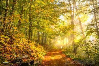 Осенние туманы .