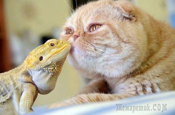 25 примеров удивительной и очень милой дружбы между животными разного вида