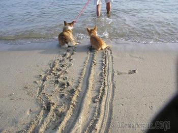 14 смешных собак, которые очень боятся воды