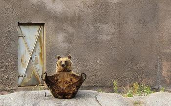 Люди произошли от медведей