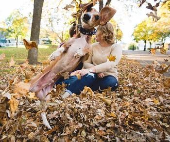 20 собак, которые мастерски умеют портить фотографии