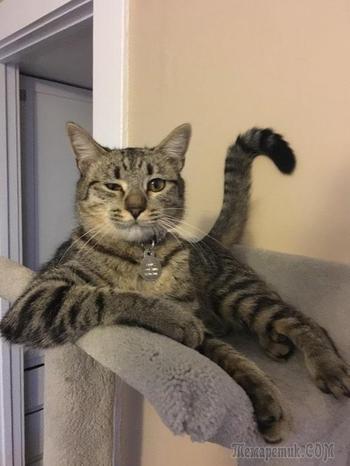 20 очень весёлых фотографий котов с забавными комментариями их владельцев