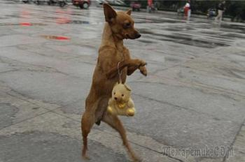 15 собак, которые ходят как люди.