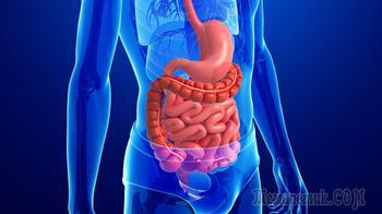 Пищеварительная система — зеркало характера и пережитых стрессов