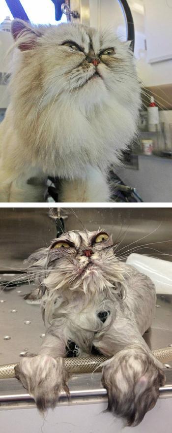 Забавные животные до и после водных процедур