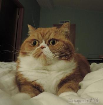 15 реакций котов на повседневные ситуации