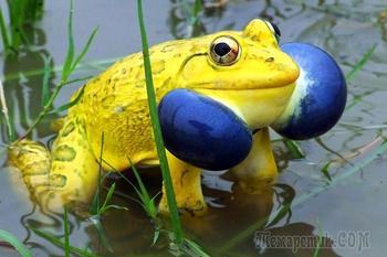Природа - лучший художник: 40 животных неожиданной расцветки