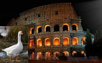 Странные причуды Древнего Рима: Почему римляне приносили в жертву собак и почитали гусей