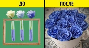 9 хитростей, с помощью которых нас обманывают в цветочных магазинах
