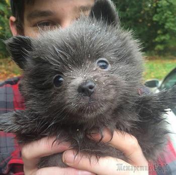 15 милых щенков, которые больше похожи на плюшевых медведей