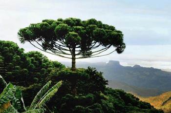 Самые красивые и необычные леса мира
