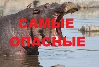 12 самых опасных сухопутных животных планеты