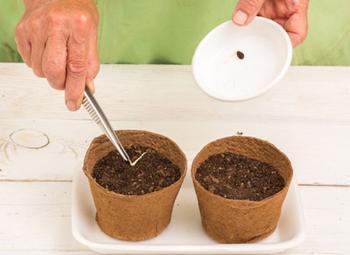 Технология и секреты выращивания арбузов в Подмосковье в теплице и условиях открытого грунта