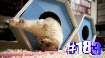 Смешные коты | Приколы с котами | Видео про котов | Котомания # 183 (видео)