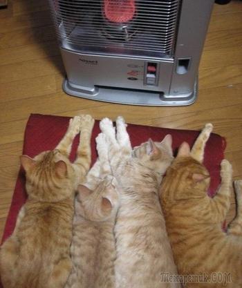 15 животных, которые ну очень хотели тепла