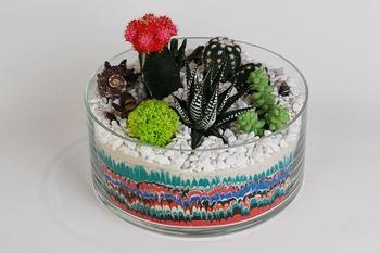 Отдельный мир в вашей квартире или флорариум из кактусов