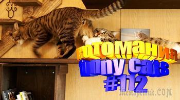 Смешные коты | Приколы с котами | Видео про котов | Котомания #112