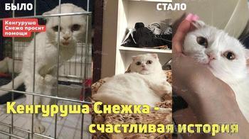Кошечка-инвалид Снежка - домашняя!