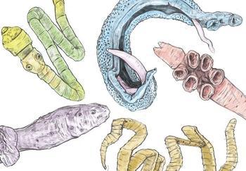 Как избавиться от паразитов народными средствами