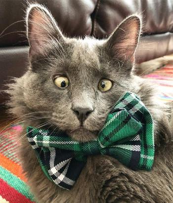 Познакомьтесь с Беларусом, очаровательным косоглазым котом, который у всех крадет сердца
