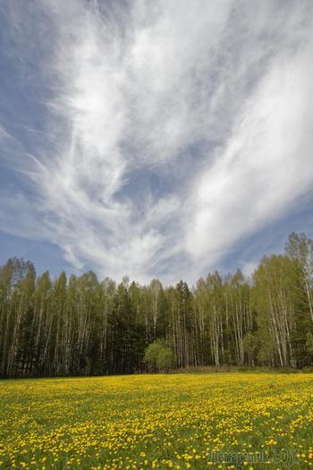 Весенние фотопрогулки по лесу