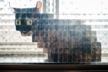 15 раз, когда котейки оказались за стеклянной дверью и стали пиксельными