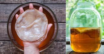Возвращение чайного гриба: удивительный напиток вновь на пике популярности