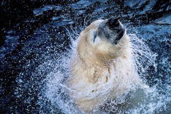 Невероятные фотографии животного мира