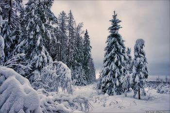 Прогулка по лесам Гжели